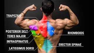Can't Get a Muscular Back? Just Do THIS!! | Kholo.pk
