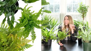 Don't Do these 7 Things to your Indoor Ferns!