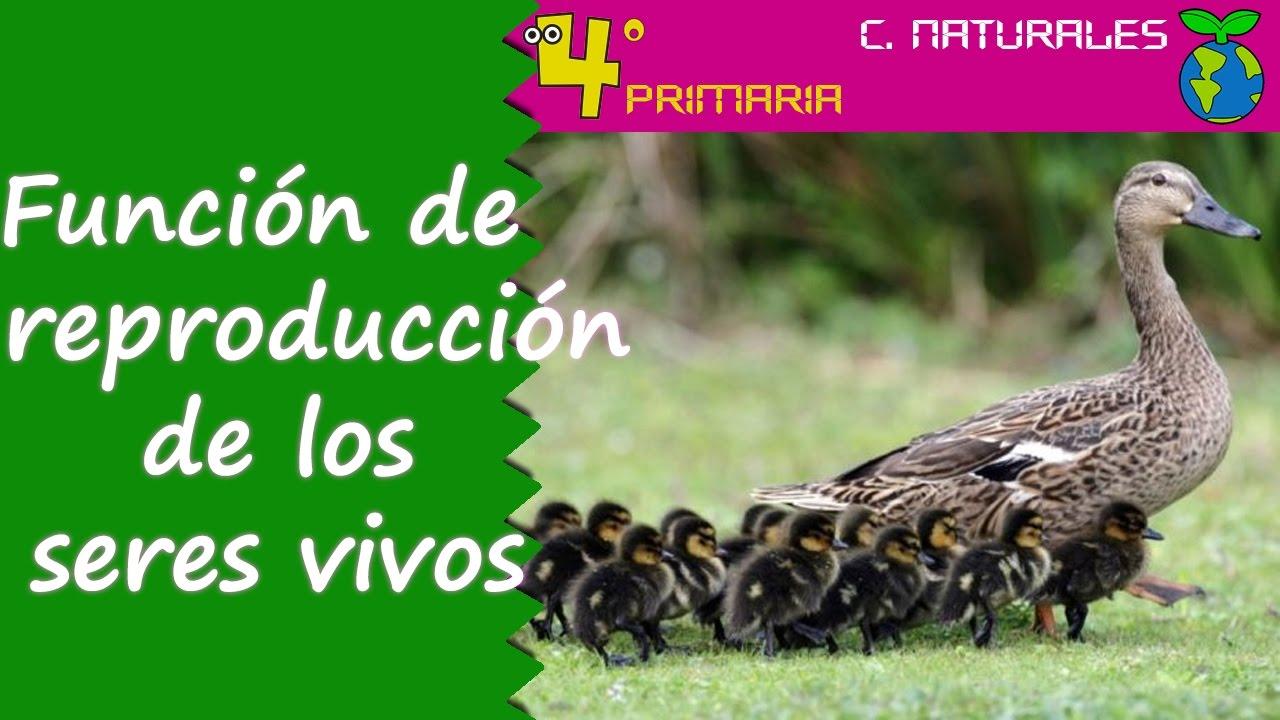 Ciencias de la Naturaleza. 4º Primaria. Tema 4. Función de reproducción en los seres vivos