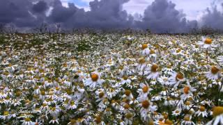 ♡ Spring Love ♡ - Giovanni Marradi