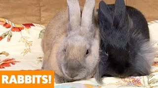 Adorable Rabbits | Funny Pet Videos