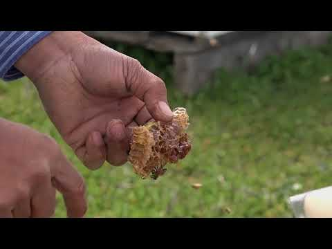 Indonesian-American Farmer Shares His Passion For Bees