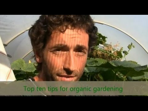 Organic Gardening – Top Ten Tips / How to grow vegetables / How To Grow episode
