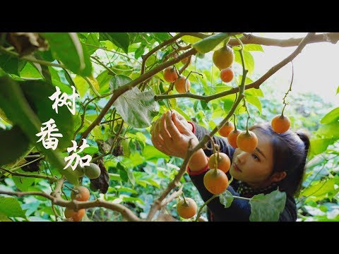 Big tree tomato a kind of food that infuses soul into pickled vegetables.