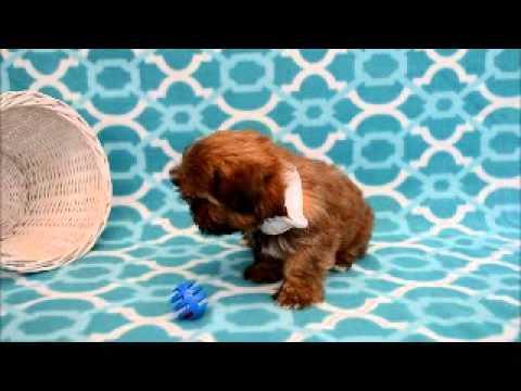 Short clip of curious little Rigley