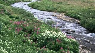 GNOSIS - Meditación Y Relajación Básica