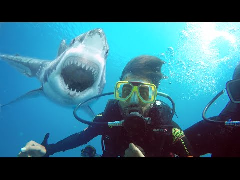 GOPRO SCUBA DIVING IN THE GREAT BARRIER REEF | KRISHNA