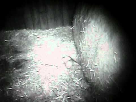 Ranuan eläinpuistoon on syntynyt harvinainen jääkarhunpentu