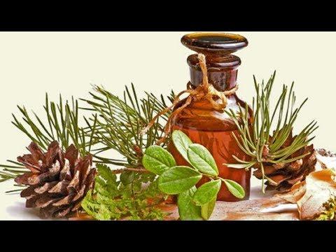 Производство пихтового масла в домашних условиях как бизнес идея