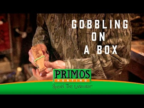 Learn how to Gobble on a Box Call video thumbnail