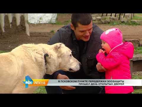 Новости Псков от 10.10.2017 # День открытых дверей в Псковском пункте передержки животных