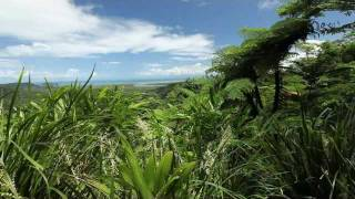 In this Adventure on our drive through North Queensland we venture along the Great Tropical Drive in North Queensland.
