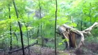 Trees Falling Compilation #1 No Music