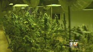Texas To Begin Accepting Applications To Dispense Medical Marijuana