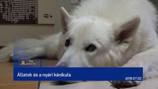 TV Budakalász / Budakalász Ma / 2018.07.02.