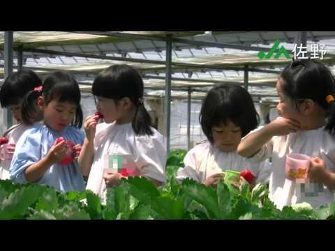 【JA佐野】 佐野市内幼稚園児の、あま~いイチゴ狩り体験♪