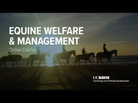 Equine Welfare & Management Online Course   UC Davis ...