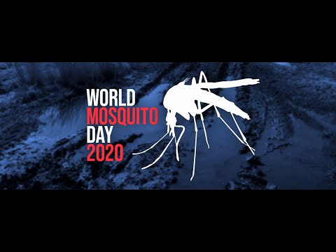 World Day Mosquito Day 2020