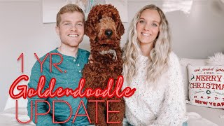 1 YR GOLDENDOODLE UPDATE!! Training, Shedding, Personality, Best Products Etc.!! :)