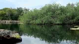 El libro rojo, Especies amenazadas - Cenotes, una ventana al inframundo