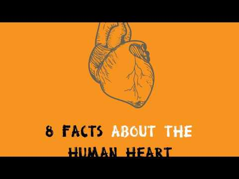 8 Amazing Facts about the Human Heart