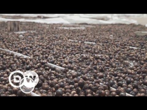 Acai - Superbeere aus Brasilien | DW Deutsch