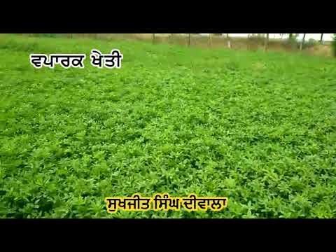 Barseem Da Beej  Rakhan Bare Jaankari- Sukhjeet Singh Diwala