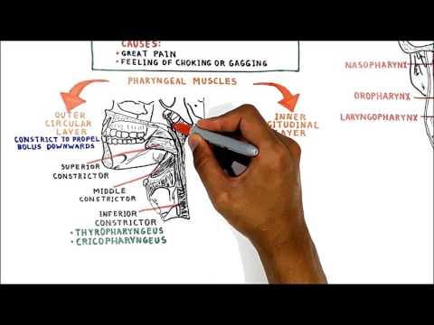 Vidéo comme gonfler les muscles dans les conditions domestiques