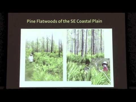 Métodos mecánicos para la restauración y la reducción de combustible en pino largo de Flatwoods