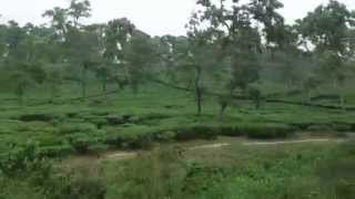 preview picture of video 'Train travel through tea garden'