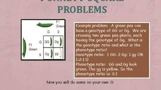 Powerpoint Punnett Squares