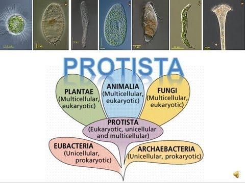 Biology ng mga parasito flukes