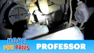 Kitten hides in an engine to find warmth on a cold winter night.