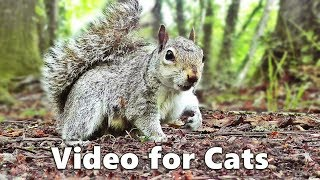 Cat TV - Squirrels and Woodland Birds Spectacular