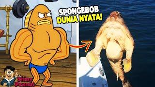 Download Video Aslinya Beneran Kekar?! Inilah Karakter Film SpongeBob di Dunia Nyata MP3 3GP MP4