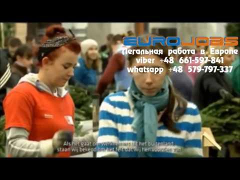 Сортировка различной продукции EuroJobs