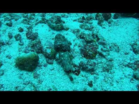 Scorpien Fish
