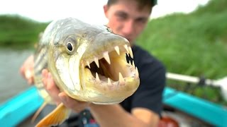 Demon Fish From Africa! -- Africa Pt. 4
