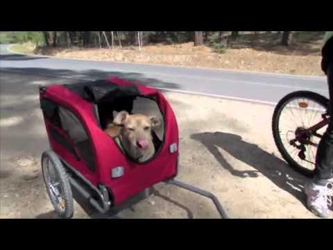 Remolque de bici para mi perro(genial)