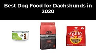 Best Dog Food for Dachshunds in 2020