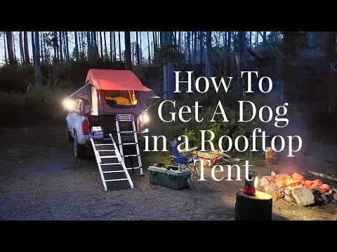Rooftop Tent with Dogs, How to get your dog in a rooftop tent