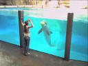 Kaarten met dolfijnen, Sea Life Brugesv Dolphin Fun