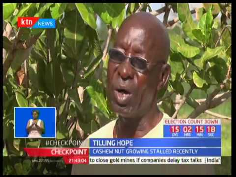 Tilling hope : Cashew nuts revival