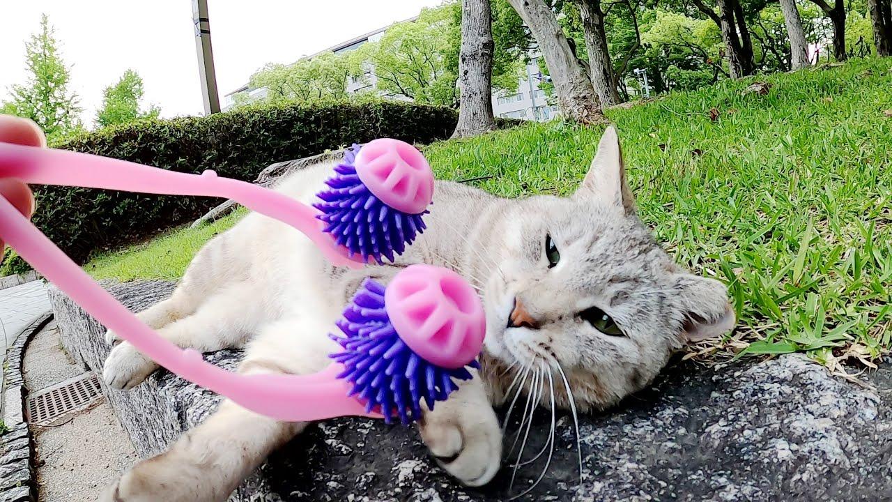 サバトラ猫に美顔ローラーでマッサージをしたら喜んでくれた!?