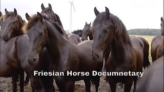 Friesian Horse Documentary