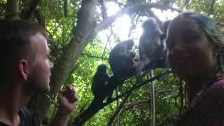 preview picture of video 'Survival für Dummies Thailand Trailer wild monkey feeding'