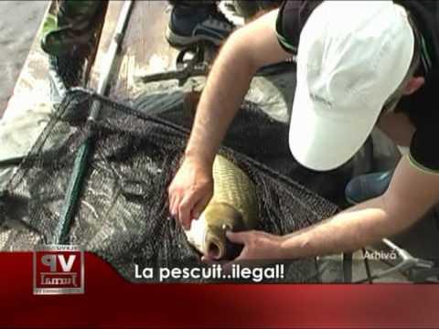La pescuit… ilegal!