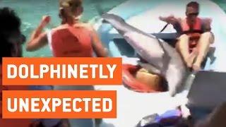 faze tari delfinul sare in barca