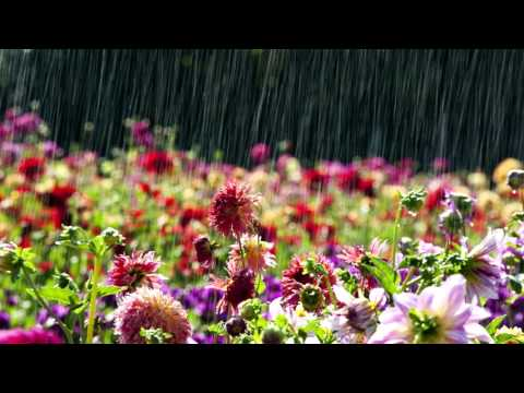 Шум дождя. Звуки природы.