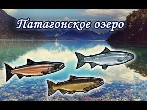 Патагонское озеро. Русская Рыбалка 3.99.